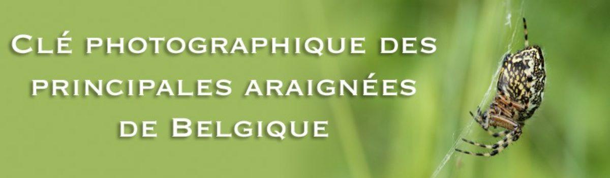Clé de détermination illustrée des principales araignées de Belgique